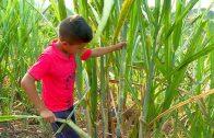 """Niños de mi tierra: """"Panela, El Tambo"""""""