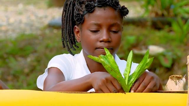 """Niños de mi tierra: """"Plantas aromáticas, Pie de Pepé"""""""
