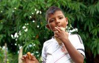 Rutas para la paz: Adecuaciones Planta de Plátano
