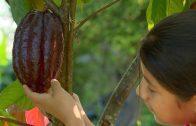 """Niños de mi tierra: """"Cacao, Santander de Quilichao"""""""