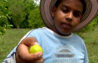 """Niños de mi tierra: """"Limón, Patía"""""""