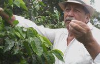 Catadores de tierra: Los caminos del café