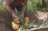 Catadores de tierra: Vendedoras de piña