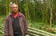 Cuentos verdes: Aprovechamiento Guadual Bitaco
