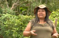 Cuentos verdes: Protectores del Bosque La Elsa