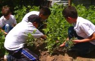 Rutas para la paz: Planta Plátano Argelia