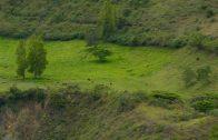 Cuentos verdes: Conservación Tenerife