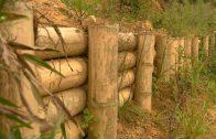Cuentos verdes: Obras biomecánicas San Bernardo