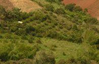 Cuentos verdes: Ordenamiento Predial El Chilcal