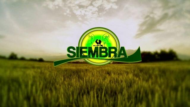 Siembra