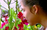 """Niños de mi tierra: """"Flores, Dagua"""""""