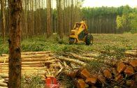 Cuentos verdes: Proyecto 109 Cobertura boscosa