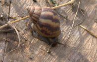 Cuentos verdes: Sensibilización caracol africano Bugalagrande