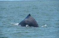 Cuentos verdes: Avistamiento de ballenas