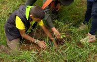 Cuentos verdes: Educación ambiental I.E. Guillermo Valencia