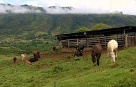 Cuentos verdes: Herramientas del paisaje Restrepo
